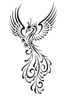 Logo firmy - Riva Studio